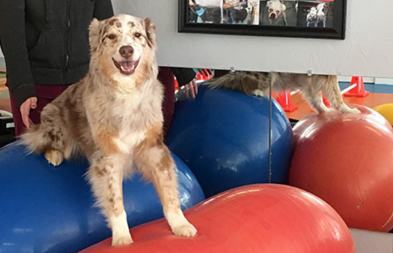 Northborough Canine Rehabilitation and Fitness Center